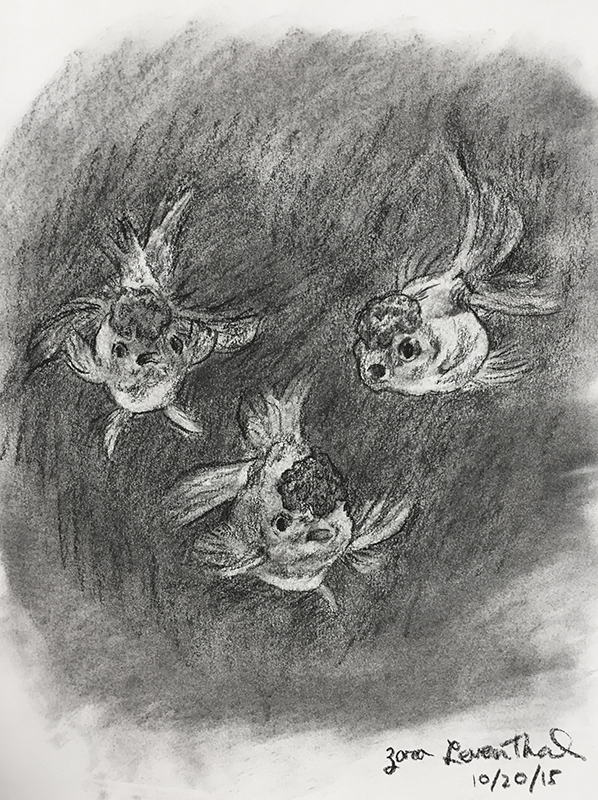 Charcoal goldfish drawing