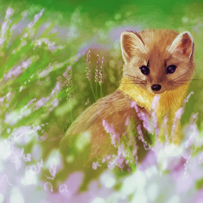 Pine Marten Digital Painting